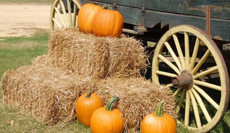 pumpkins next to bales of hay and a wagon